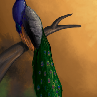 Painting A Peacock