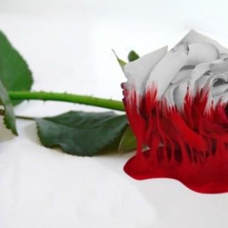Melting Rose Using Gimp